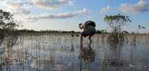 Late afternoon in the Everglades